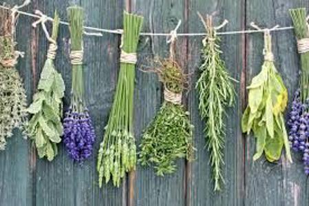 Εικόνα για την κατηγορία Βότανα / Τσάγια .